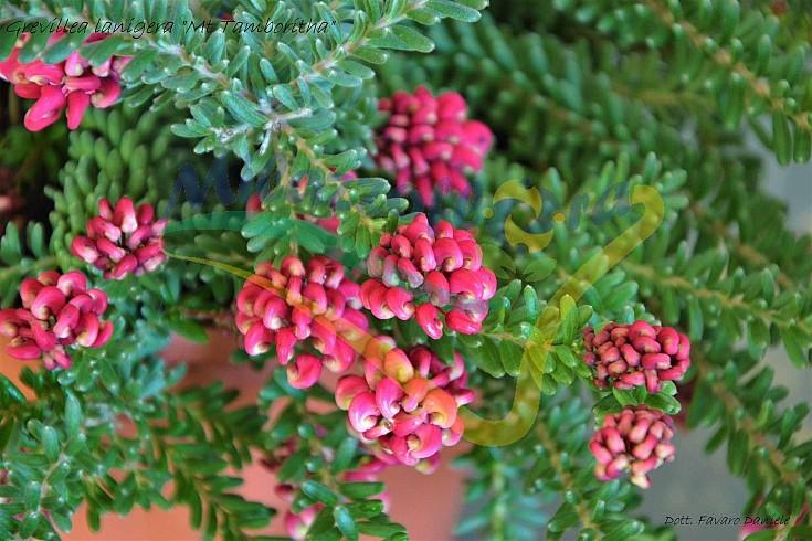 Particolare dei fiori