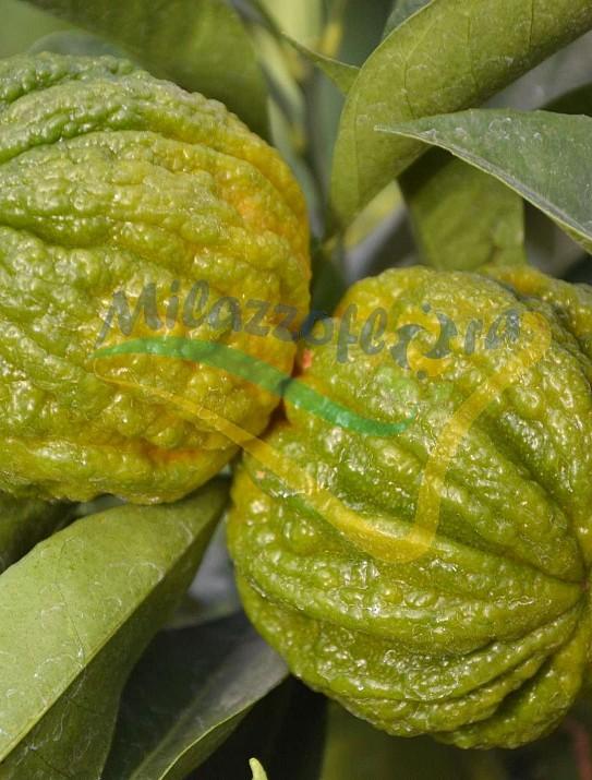 Citrus Arancio Corrugato