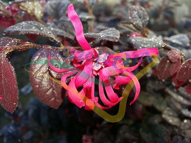 Particolare del fiore