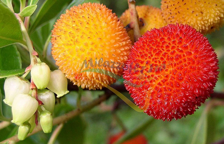 Fiori e frutti