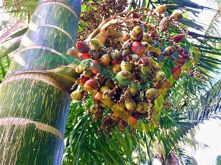 Grappolo dei frutti