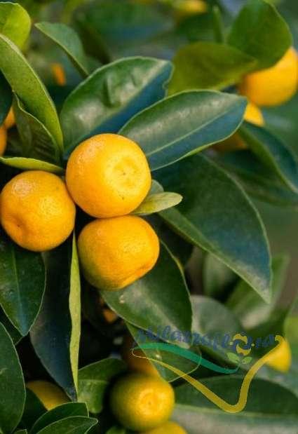 Frutti e foglie