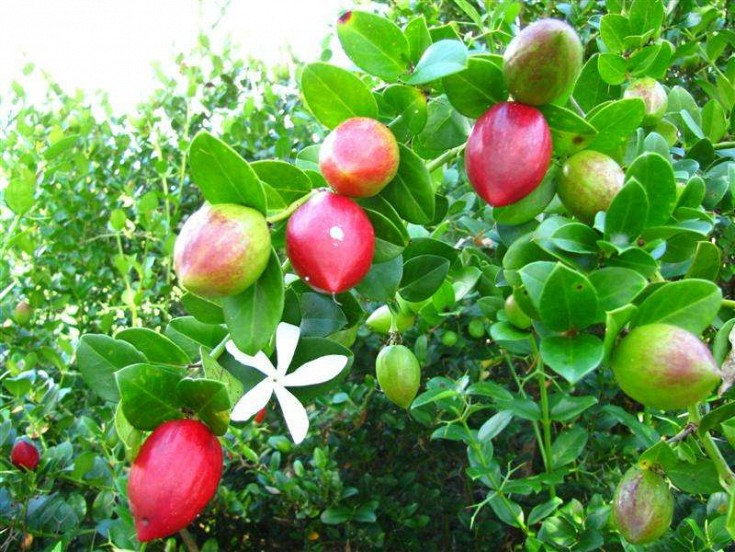 Fruits and flowers