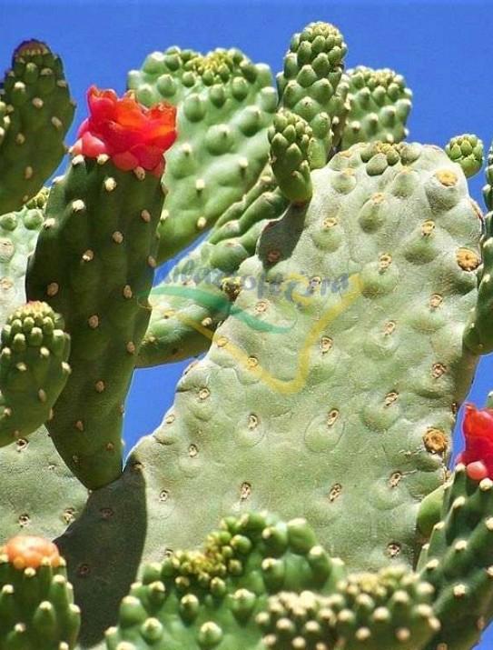 Road Kill Cactus