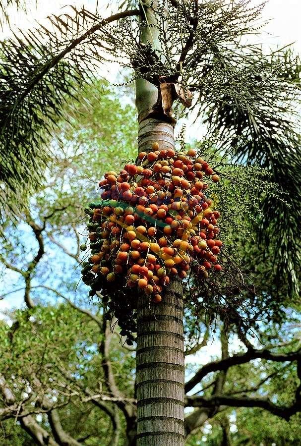 Particolare dei frutti