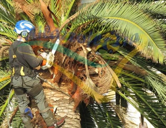 Potatura delle palme, il Consiglio dei Nostri Esperti